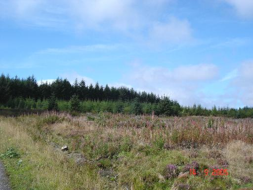 Forestry near Llyn Brenig