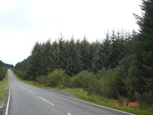 B4501 through forestry