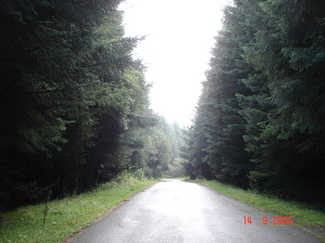 Forestry track leading to Llyn Brenig