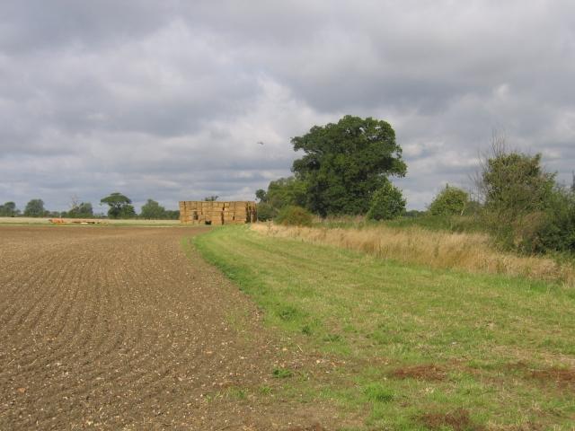 Farmland, Edworth, Beds