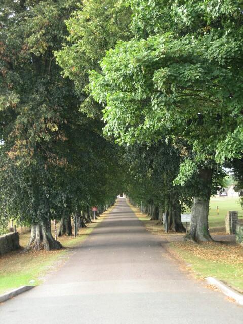 Avenue of Trees, RAC