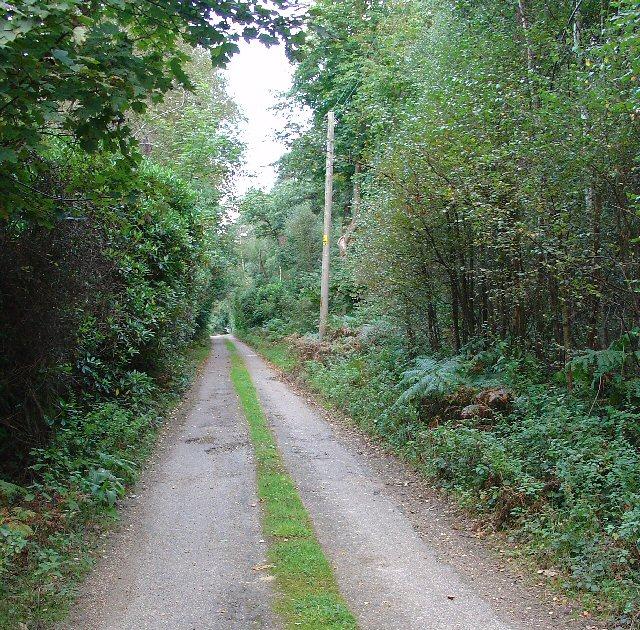 Woodland Lane, running through Barnsnap Wood