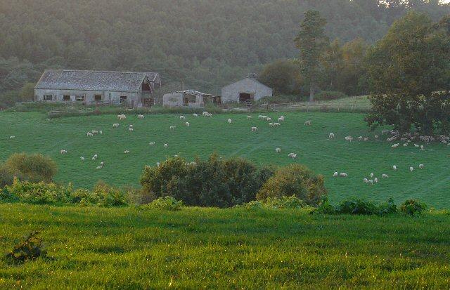 Grouselands Farm, Near Colgate, West Sussex.