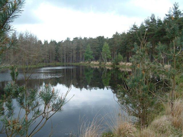 Woolmer Pond, Hampshire