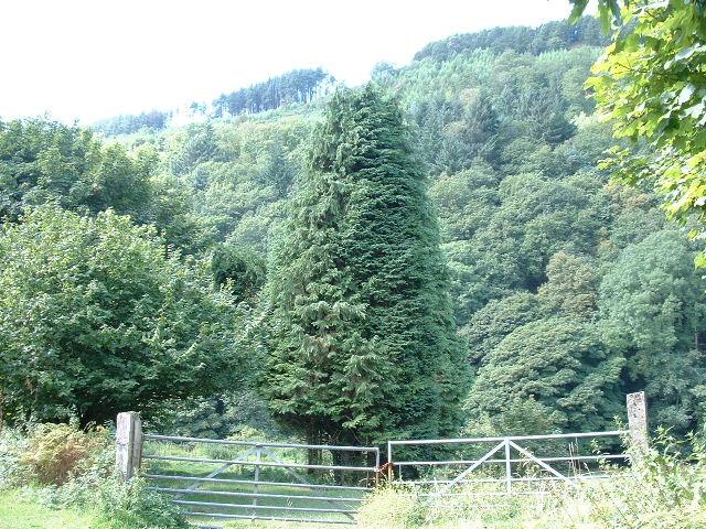 Cwm Dyffryn