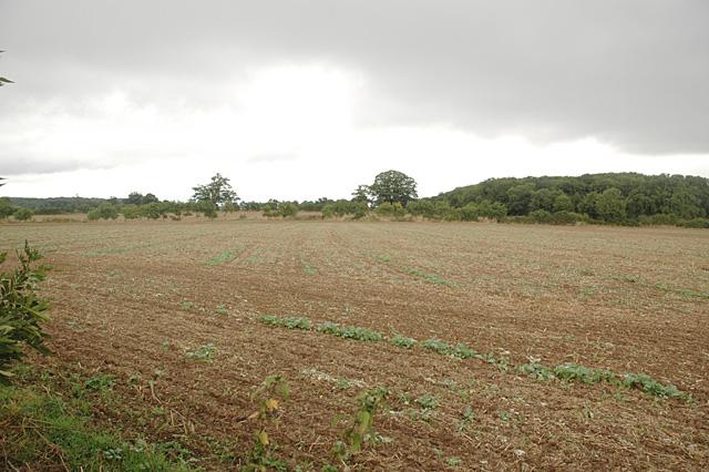 Fields near Sneachill