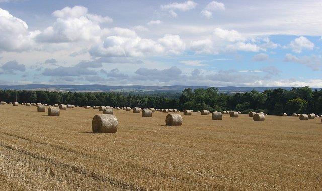 Round bales near Haddington.