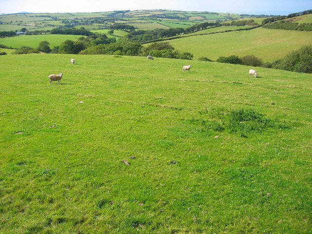 Sheepfield looking North to Scob Hill