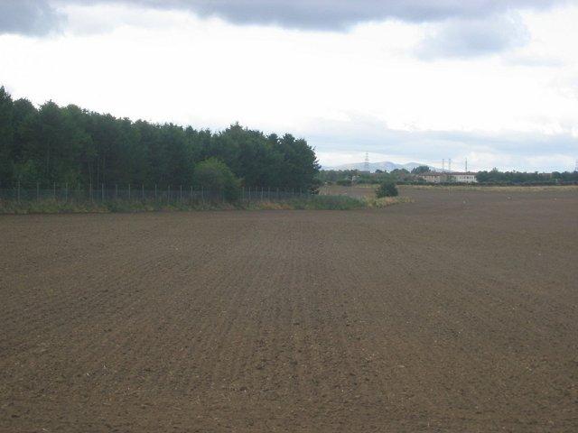 Newly planted field, near Tranent.