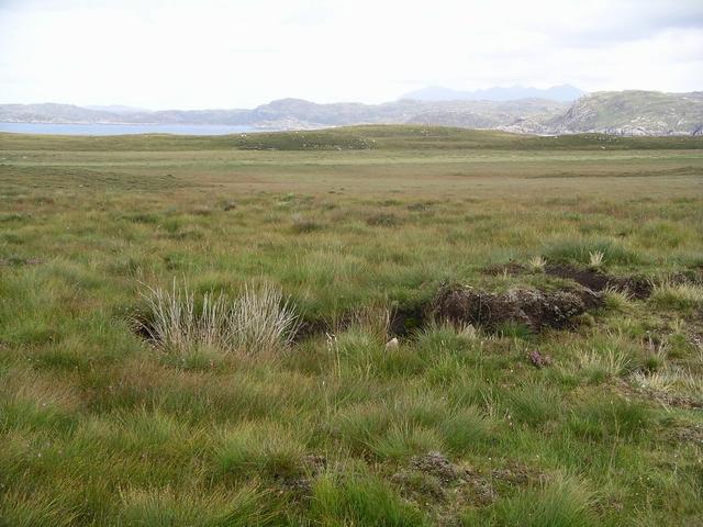 Bog, Loch Osgaig