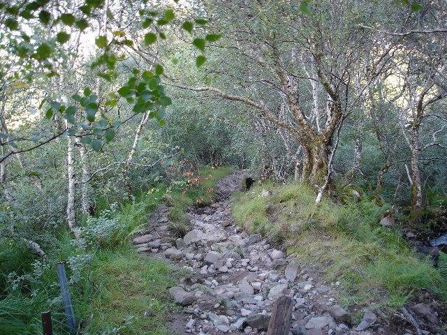 Shieldaig path running through Birchwood