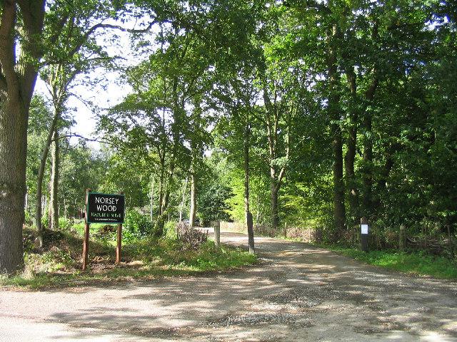 Norsey Wood, Billericay