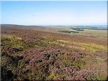 NT1561 : Grouse Moor, Bavelaw. by Richard Webb