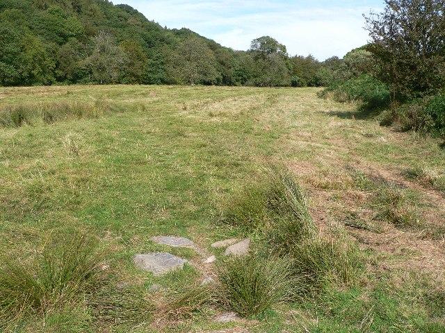 Grassland by River Barle
