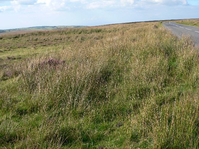 Moorland near Brendon Two Gates