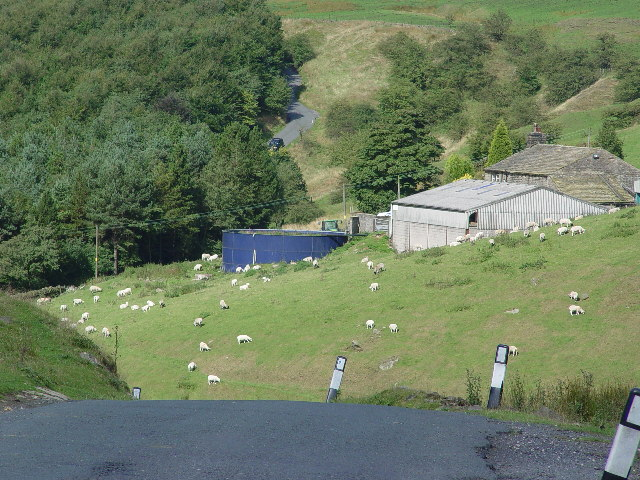 Farm near New Bridge