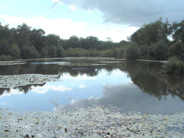Combe Pond, Rake, West Sussex