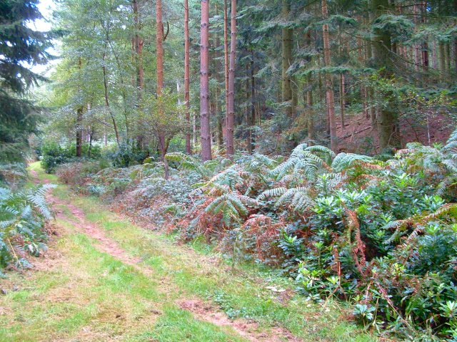 Galley Grove, Rogate, West Sussex