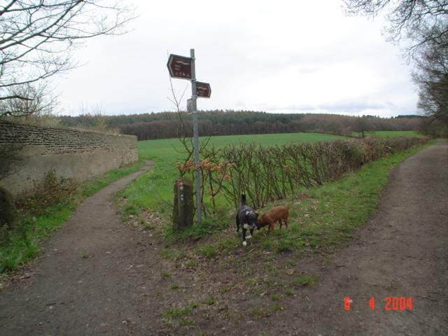 Trans-Pennine Trail near Walton.