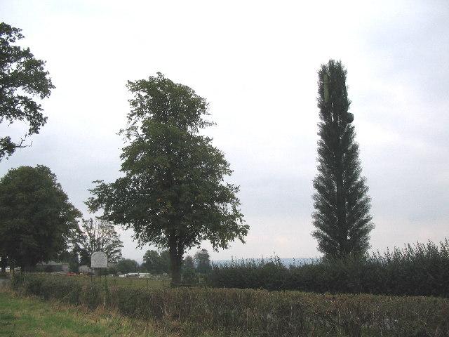 Telecom tree