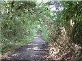 SU6885 : The Track to English Farm, Oakingham Bottom by Colin Bates