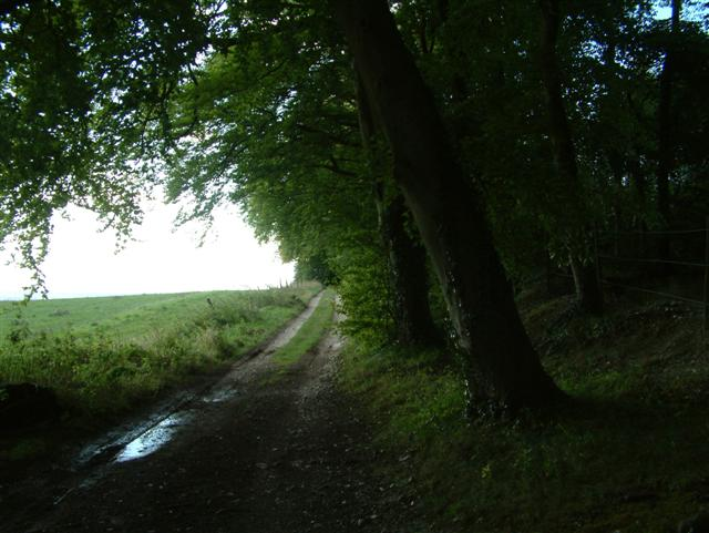 The Bridleway past Bixmoor Wood