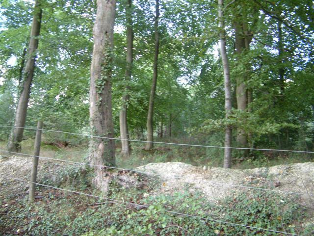 Bixmoor Wood