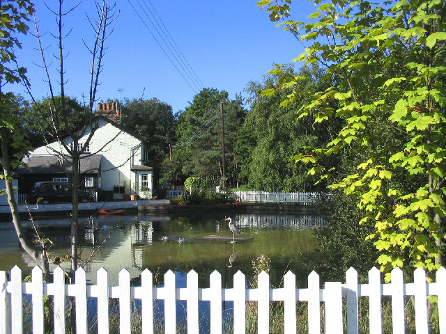 Pond, Headley Common, Great Warley