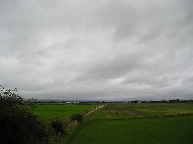 Linwood Moss