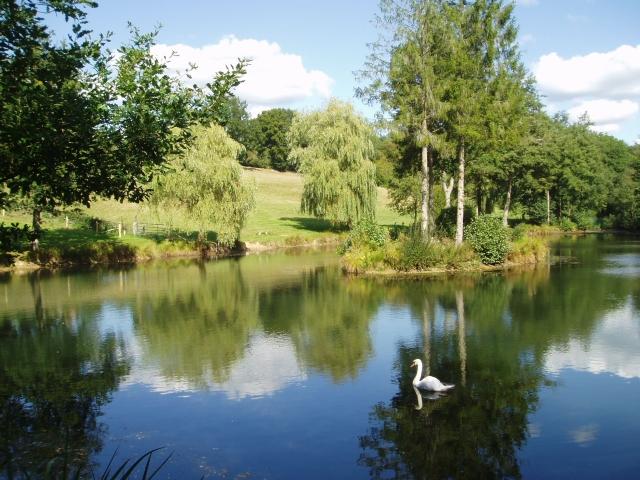 Annwood Brook pond