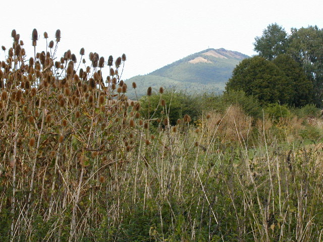 Teasels and The Wrekin from Cressage bridge