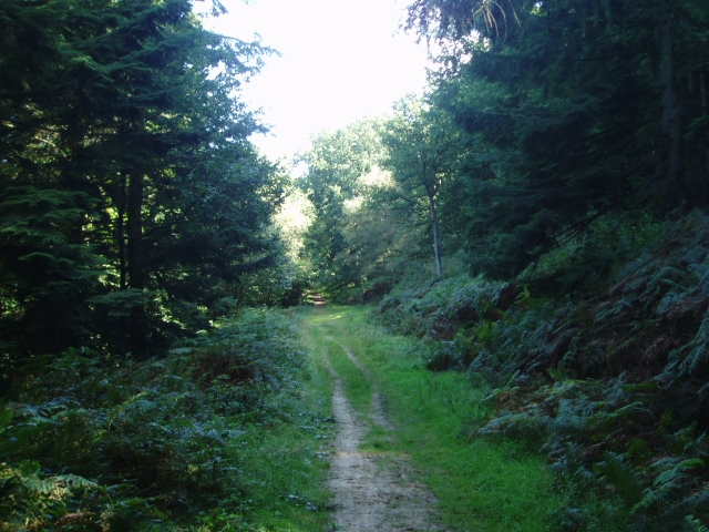 Sheffield Forest