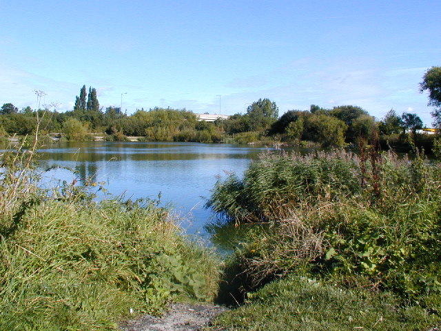 Angling Club pond near Sherburn in Elmet