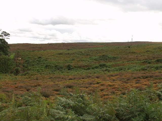 Open moorland on Ruabon Mountain