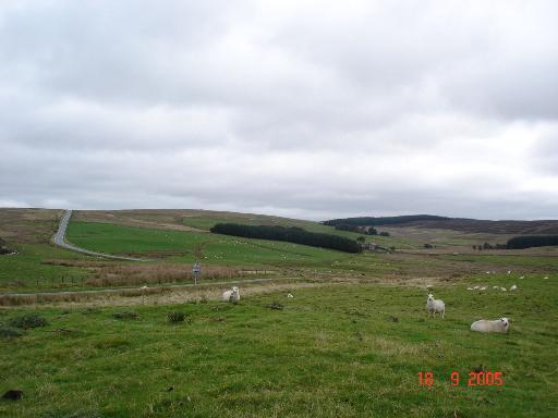 Moorland at Bwlch Gwyn