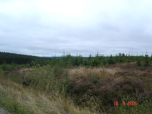 Alwen Forest