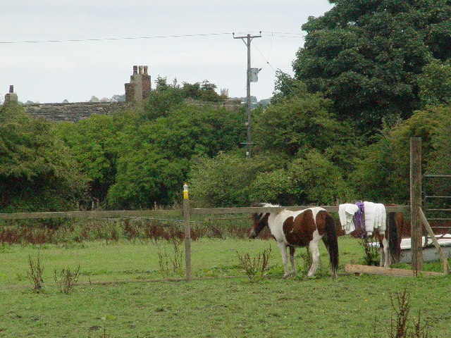 Ponies in field behind Bullace Trees Farm