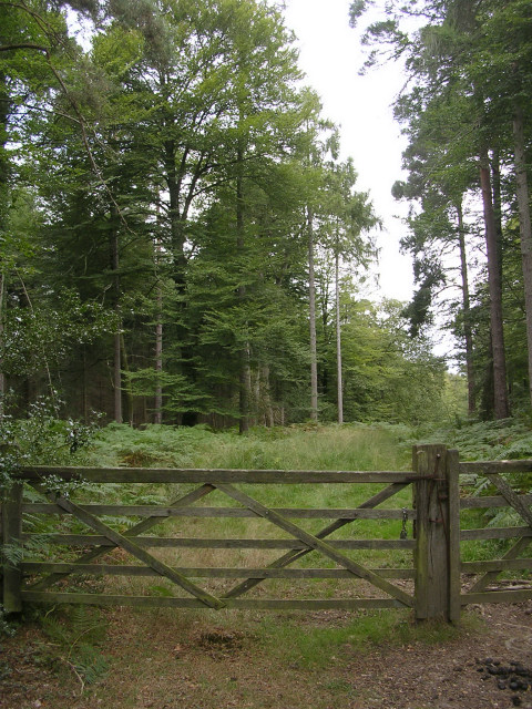 Entrance to Shave Green Inclosure, New Forest