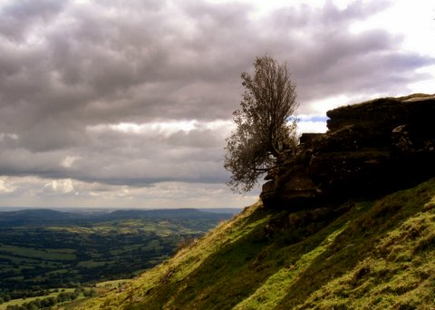 Tree on the Black Hill overlooking the Monnow Valley