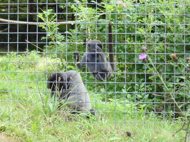 Looe Monkey Sanctuary