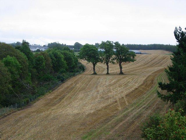 Stubble field, near Stirling