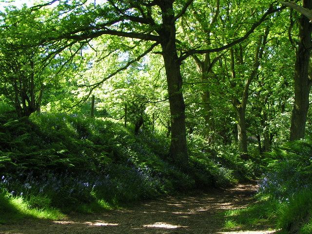 Woodland path - Hanchurch Hills