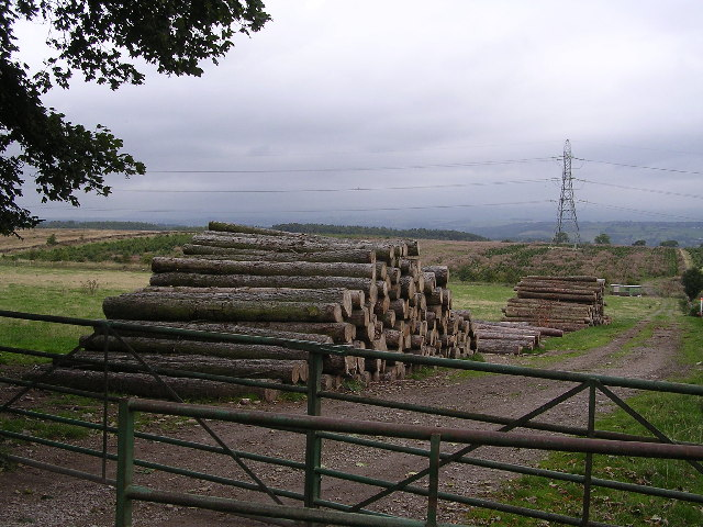 Cut Timber by Greenways Farm