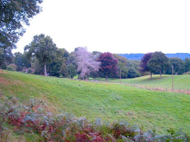 Trotton Marsh, Rogate, West Sussex