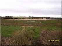 NZ1768 : Callerton Pond by Weston Beggard