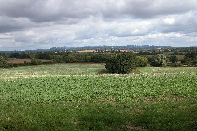 View from Bickerton Court