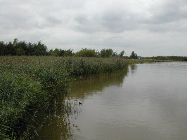 Reed Beds in Rushcliffe Country Park
