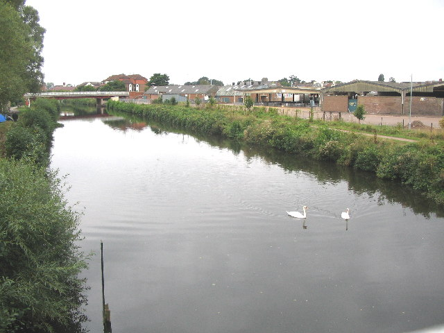 Swans on the River Tone