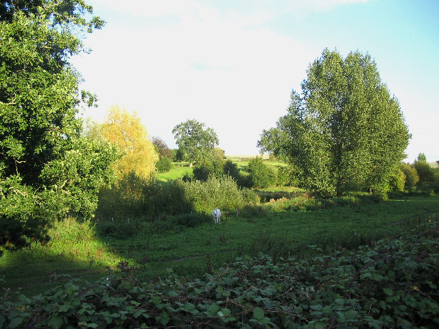 Water meadows at Longbridge Deverill