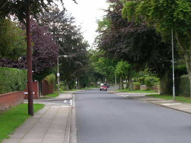 Beech Walk